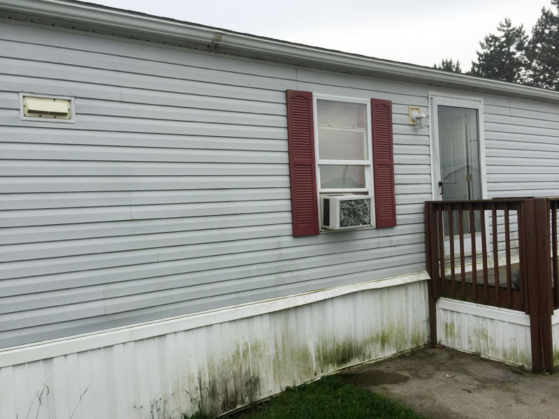 dirty vinyl siding covered in algae needs cleaning